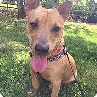 Adopt A Pet :: Skillet - Alpharetta, GA