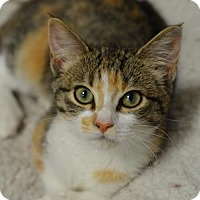 Adopt A Pet :: Princess Leia	160576 - Atlanta, GA