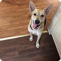 Adopt A Pet :: Zoe - Arlington, TX