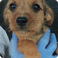 Adopt A Pet :: Coco's Coral - Las Vegas, NV