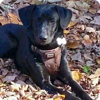 Adopt A Pet :: Jetta - CUMMING, GA