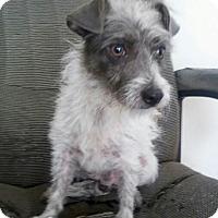 Adopt A Pet :: Squiggy - San Antonio, TX