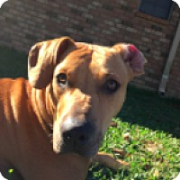 Adopt A Pet :: Butch - Denham Springs, LA