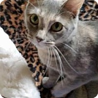 Adopt A Pet :: Rose-foster care - Voorhees, NJ
