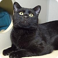 Adopt A Pet :: Sidd - Divide, CO