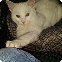 Adopt A Pet :: Prince - Levelland, TX