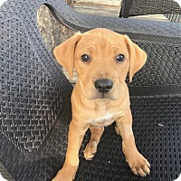 Adopt A Pet :: Fritz - Jacksonville, FL