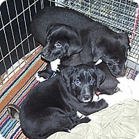 Adopt A Pet :: 2boys & 1 girl - Denver, IN