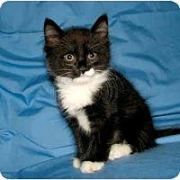 Adopt A Pet :: Buddy - Oxford, NY