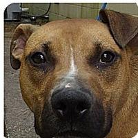 Adopt A Pet :: Ben - Bloomsburg, PA