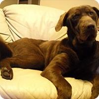 Adopt A Pet :: Rosie - Conway, AR