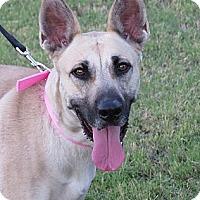 Adopt A Pet :: Suki - Scottsdale, AZ