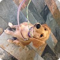Adopt A Pet :: Pandora (Pandy) - BIRMINGHAM, AL