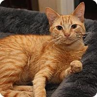 Adopt A Pet :: Chloe - Cypress, TX