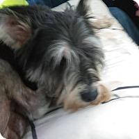 Adopt A Pet :: Montana