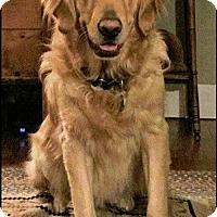 Adopt A Pet :: Atticus #0512 - Fort Worth, TX