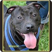 Adopt A Pet :: Mason-Needs Foster Home - Memphis, TN