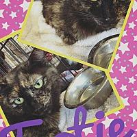Adopt A Pet :: Tootie - Scottsdale, AZ