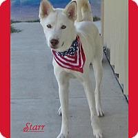 Adopt A Pet :: Starr - Hillsboro, TX