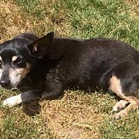 Adopt A Pet :: Tyke - Buffalo, NY