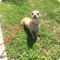 Adopt A Pet :: Jill - San Antonio, TX