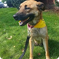Shepherd (Unknown Type) Mix Dog for adoption in Detroit, Michigan - Cammie-Pending!