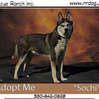 Adopt A Pet :: Sochi - Yreka, CA