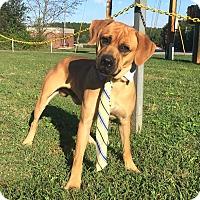 Adopt A Pet :: LINCOLN - Lexington, NC