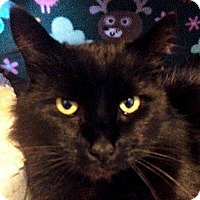 Adopt A Pet :: Billy Black - Port Angeles, WA