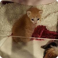 Adopt A Pet :: Queso - Austin, TX