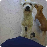 Adopt A Pet :: AOKI - Naples, FL