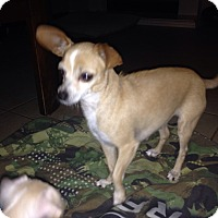 Adopt A Pet :: Lola - Winchester, CA