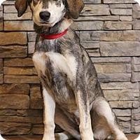 Adopt A Pet :: Victoria - Waldorf, MD