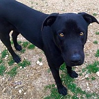 Adopt A Pet :: McGee - Clifton, TX