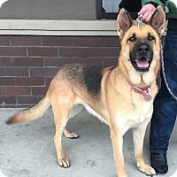 Adopt A Pet :: Chloe May - Modesto, CA