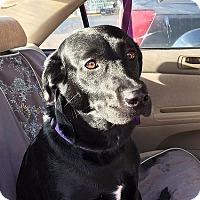Adopt A Pet :: Nina - Yorktown, VA