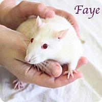 Adopt A Pet :: Faye - Bradenton, FL