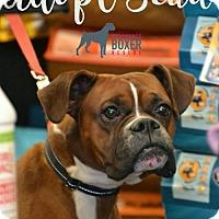 Adopt A Pet :: Beau - Woodbury, MN