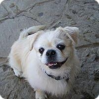 Adopt A Pet :: Lucky Chuck - Tyler, TX