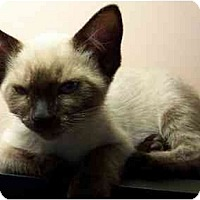 Adopt A Pet :: Bahja & Loreto - Arlington, VA