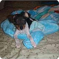 Adopt A Pet :: Aspen - Arlington, TX