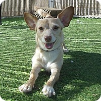 Adopt A Pet :: Fionna - Phoenix, AZ