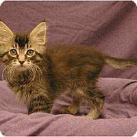 Adopt A Pet :: Lola - Sacramento, CA