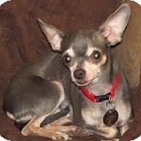 Adopt A Pet :: Angie - Shawnee Mission, KS