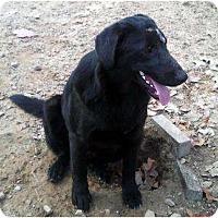 Adopt A Pet :: Keeter - Harrison, AR