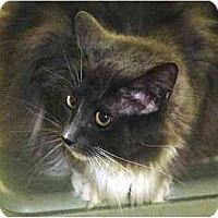Adopt A Pet :: Pookie - Chesapeake, VA
