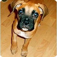 Adopt A Pet :: Cooper - Brunswick, GA