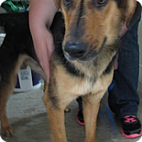 Adopt A Pet :: Cezar*ADOPTED!* - Chicago, IL