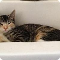 Adopt A Pet :: Tiera - East Hanover, NJ