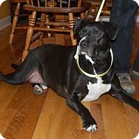 Adopt A Pet :: Tyson - Raritan, NJ